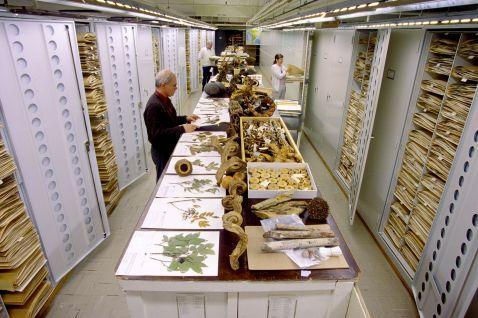 Масштаби, приголомшливі уяву: таємні колекції музею природної історії