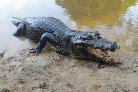 10 самих страхітливих істот Амазонки, наткнувшись на яких пошкодуєш, що приїхав