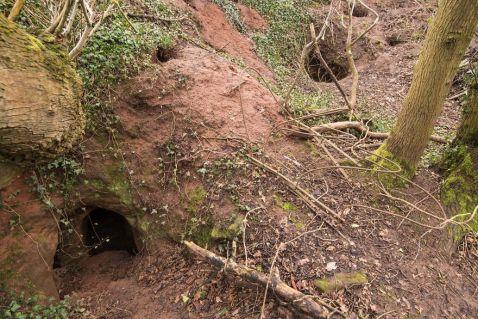 Ця кроляча нора — вхід в секретну 700-річну мережу печер, побудованих тамплієрами!