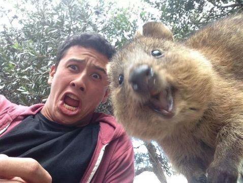 10 кумедних фото, які доводять, що квокки — найщасливіші тварини в світі