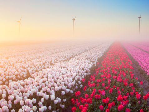 15 фантастично прекрасних квітучих полів з усіх куточків світу