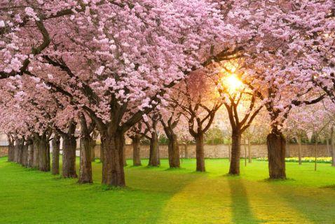 Як настає весна в різних куточках планети