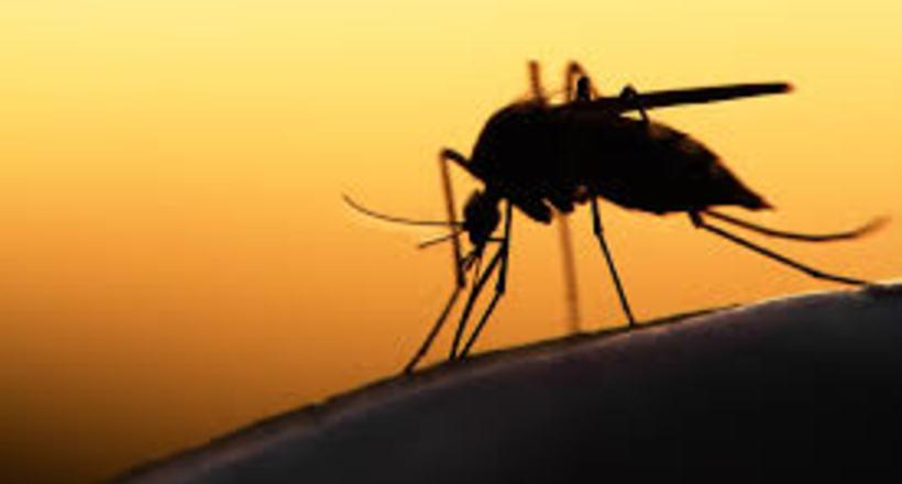 Чому одних комарі кусають частіше, ніж інших?