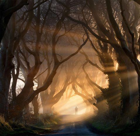 Приголомшливі живі тунелі Північної Ірландії