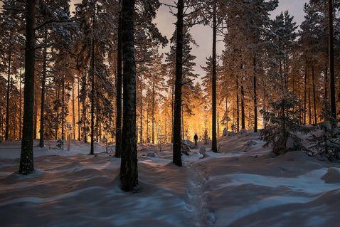 Містичне сяйво у фінському лісі