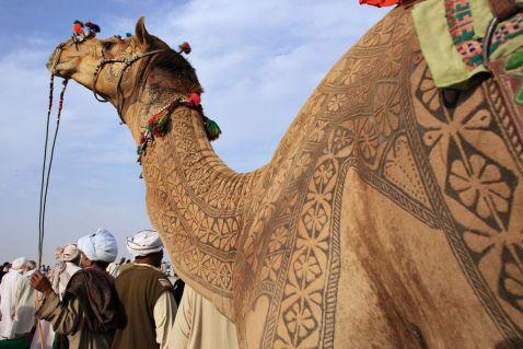 Фестиваль верблюдів у Биканере
