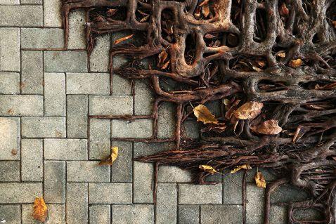 11 унікальних фото протистояння природи і людини – дерева проти бетону