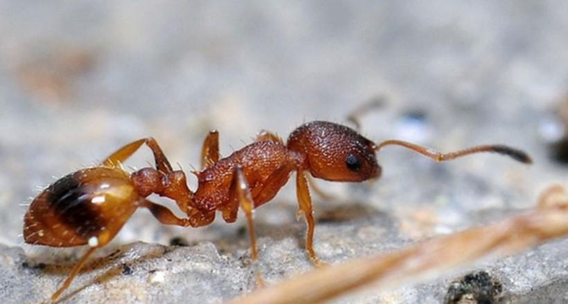 Половина мурах у мурашнику — ледарі, які теж приносять користь