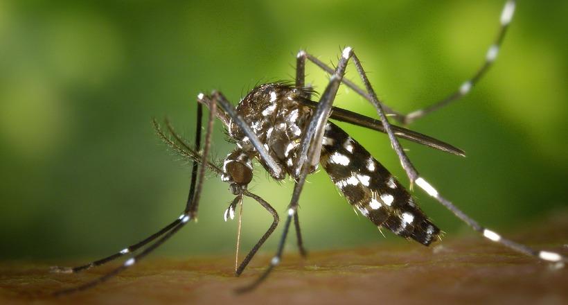 Порятунок для всіх індійців: смартфон, що відлякує комарів